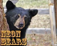 Neon Bears, Black Fiction